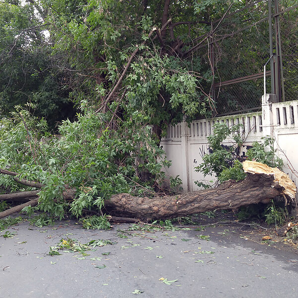 tree fell down the road