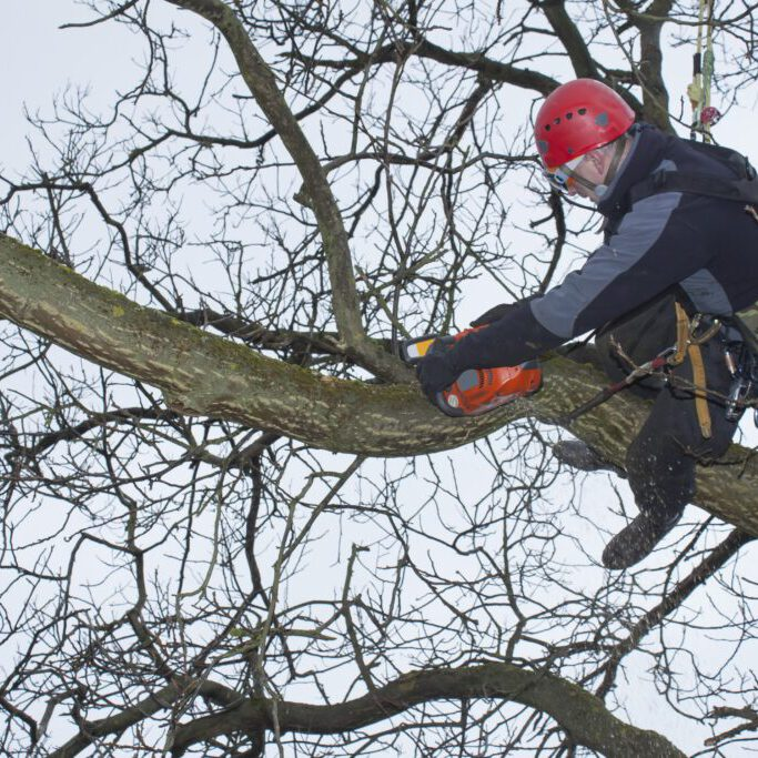 worker in the tree